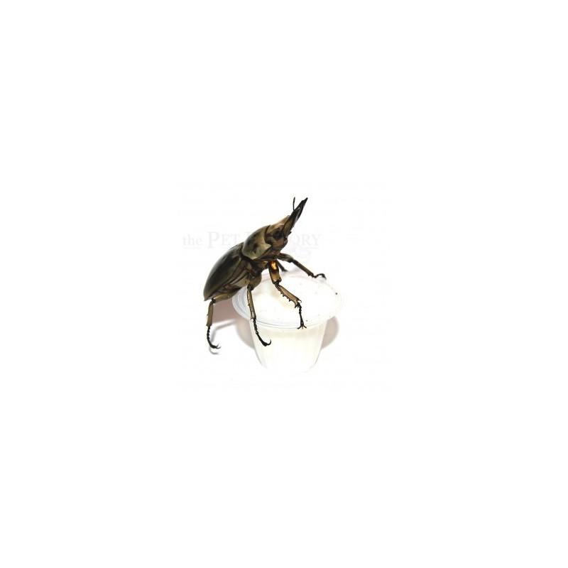 Jelly per insetti 10 pezzi - The Pet Factory